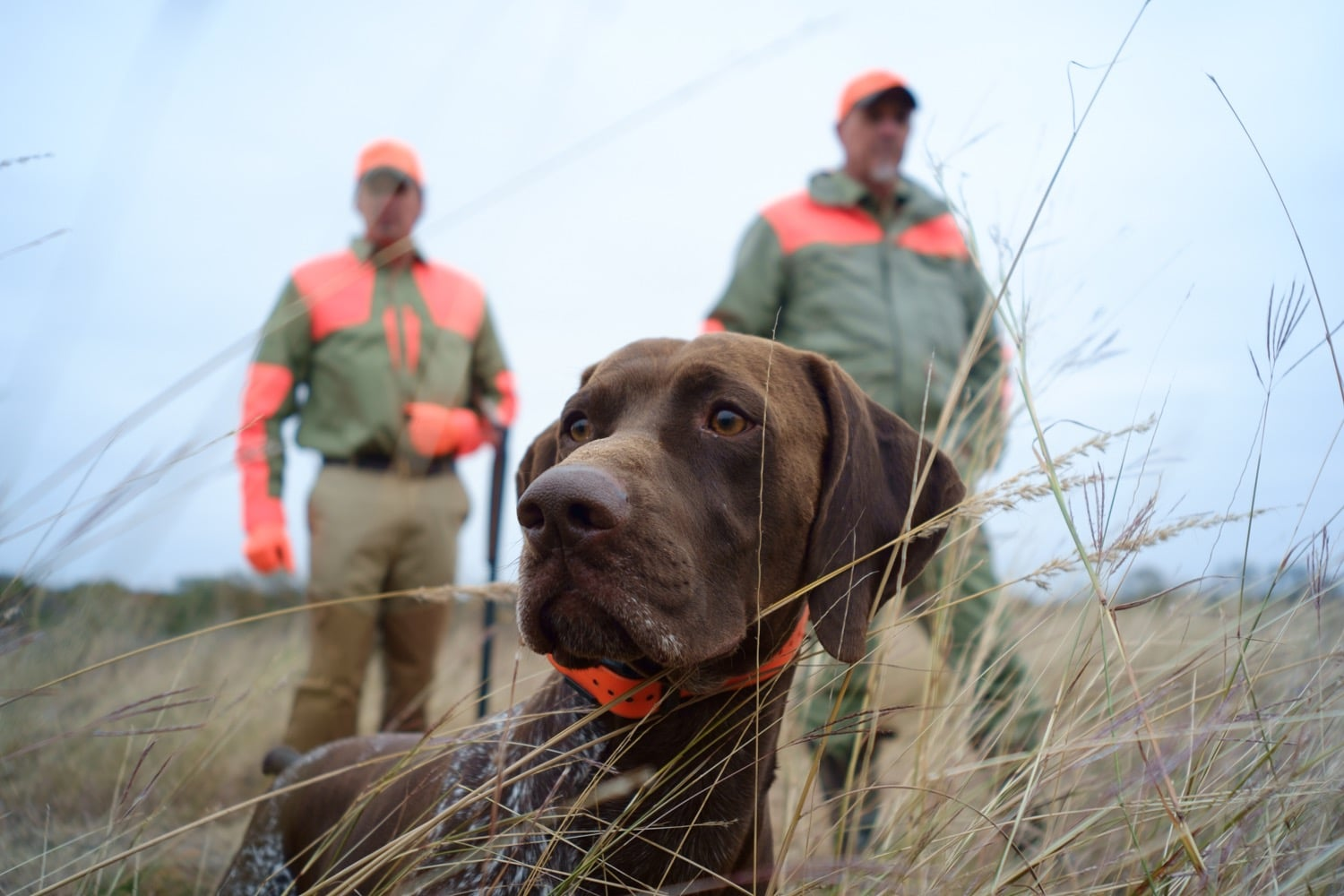hunting dog with members at hageman reserve
