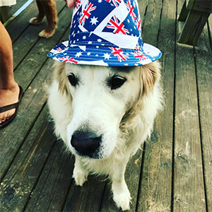 golden retriever in a hat